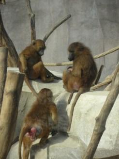 Zoo de Vincennes (365)