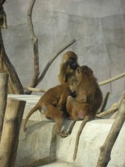 Zoo de Vincennes (366)