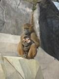 Zoo de Vincennes (369)