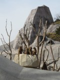 Zoo de Vincennes (374)