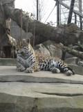 Zoo de Vincennes (409)