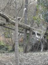 Zoo de Vincennes (411)