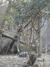Zoo de Vincennes (412)