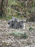 Zoo de Vincennes (415)