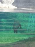 Zoo de Vincennes (42)