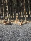 Zoo de Vincennes (55)