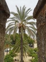 Alcázar de los Reyes Cristianos (189)