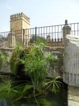 Alcázar de los Reyes Cristianos (83)