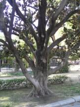 La Plaza de España (124)