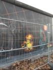 Berliner Mauer - East Side Gallery (102)