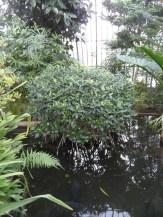 Jardin des serres d'Auteuil (108)