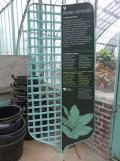 Jardin des serres d'Auteuil (27)