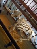 Musée d'histoire naturelle de Nantes (55)
