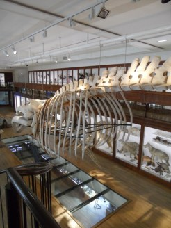 Musée d'histoire naturelle de Nantes (98)