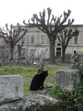Saint-Émilion (114)