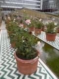 2. Jardins d'Orient (160)