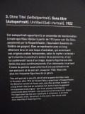 3. Paul Klee (145)