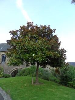 Fougères (155)