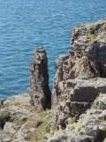 De Cap Fréhel à Fort La Latte (441)