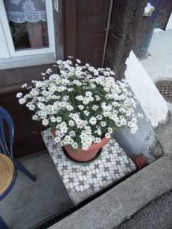 jungfraujoch-top-of-europe-401