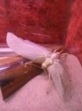 la-serre-aux-papillons-109