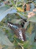 la-serre-aux-papillons-43