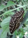 la-serre-aux-papillons-47