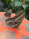 la-serre-aux-papillons-50
