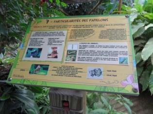 la-serre-aux-papillons-53