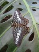 la-serre-aux-papillons-55