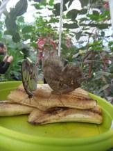 la-serre-aux-papillons-6