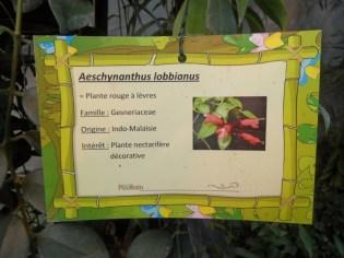 la-serre-aux-papillons-71
