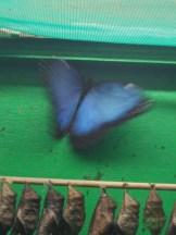 la-serre-aux-papillons-99