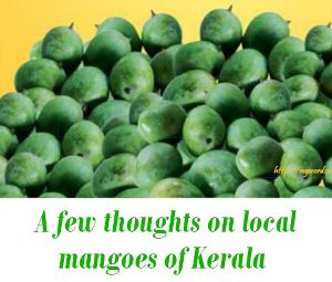 Local Mangoes Available in Kerala