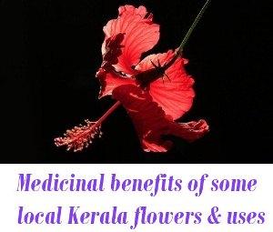 Medicinal benefits of Kerala flowers