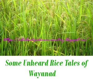 Rice Tales of Wayanad