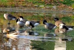 Preening Flock