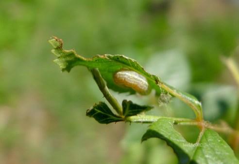 The Nasty Caterpillar