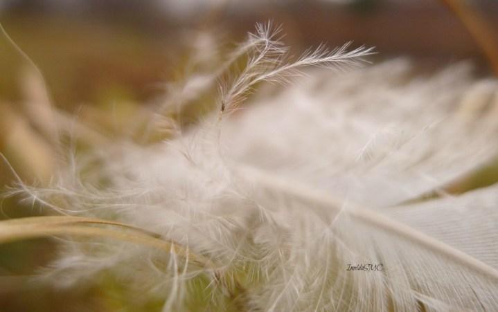 Wispy Feather