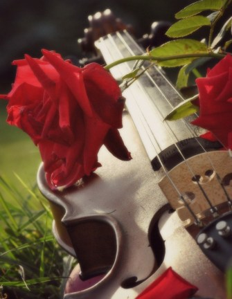 Violin and roses3
