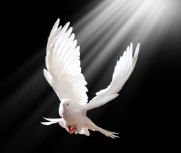 A dove - a symbol of all that is pure