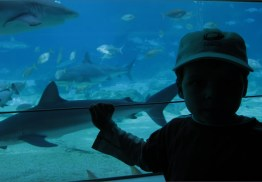 It was great to see the sharks...........through thick glass!!!