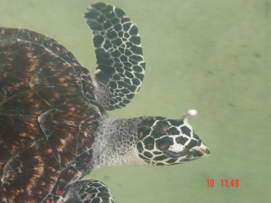 Turtle at Luka Eco Park