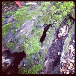 Rock Pools Moss tree