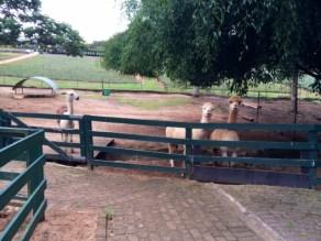 Alma Park Zoo at Big Pineapple