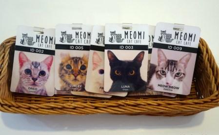 Cat-Café in Singapur, Katzenliebe leihweise