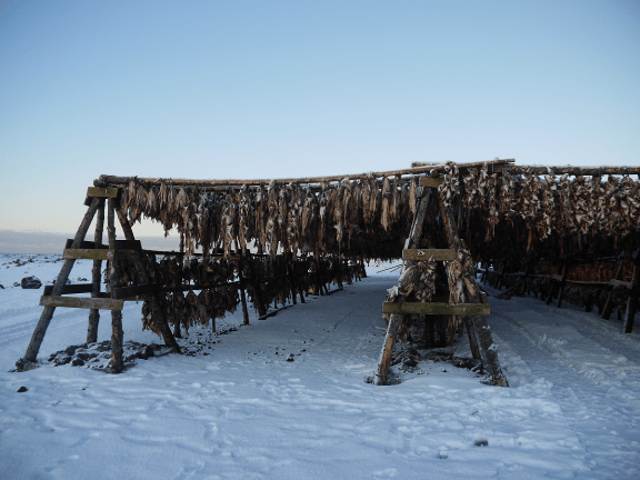 Island, Trockenfischgestelle auf Reykjanes