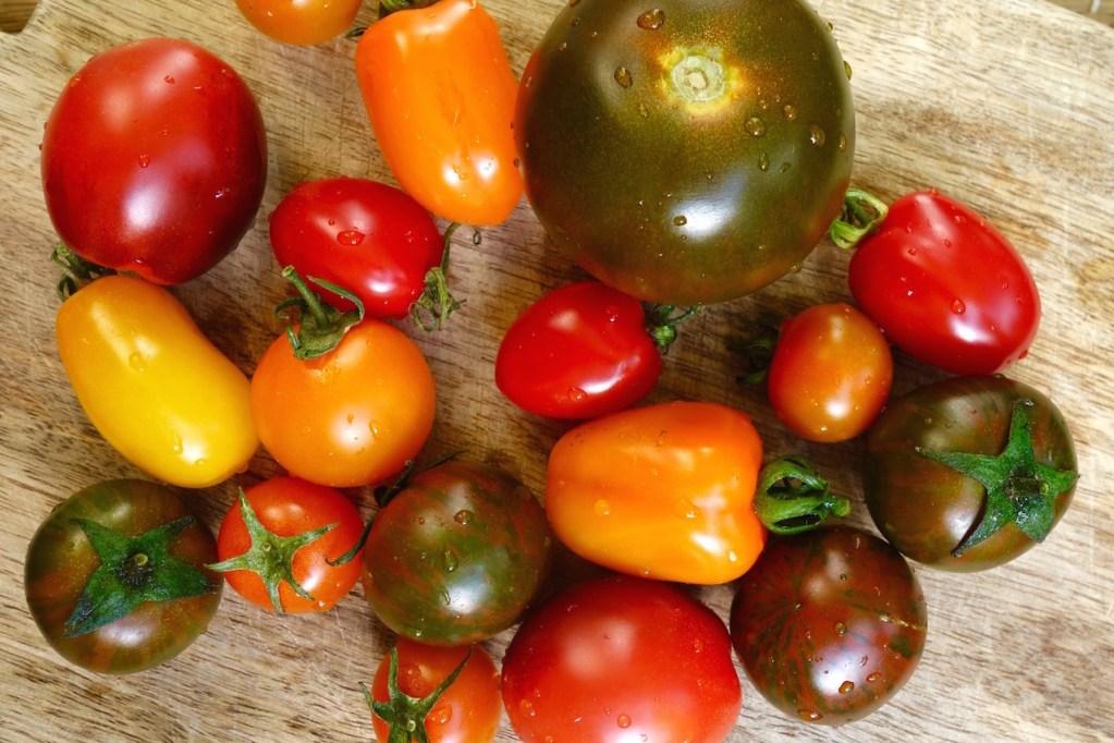 Tomaten, Tomatenvielfalt, kanarische Tomaten
