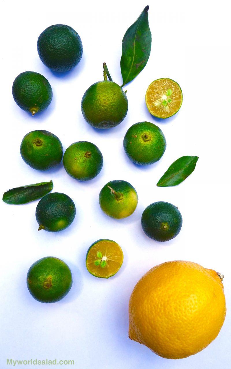 Kalamansi, oder Calamansi, die beliebteste Zitrusfrucht der Philippinen