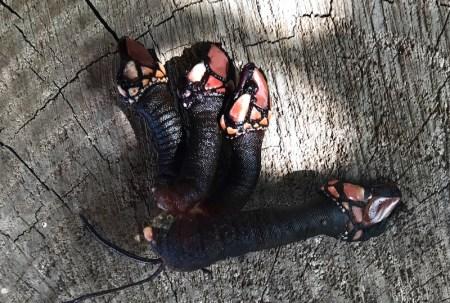 Percebes oder Entenmuschel von den Kapverden